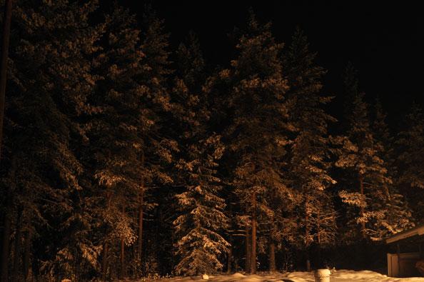 sneeuw-avond