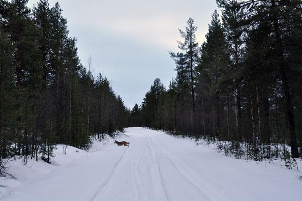 winterdag-jussi-dooi
