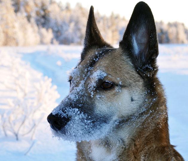 jussi-sneeuw