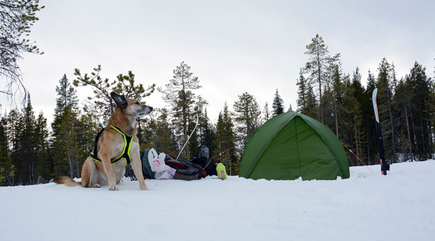 jussi-tent-appok2