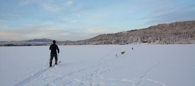 purki-ski-honden