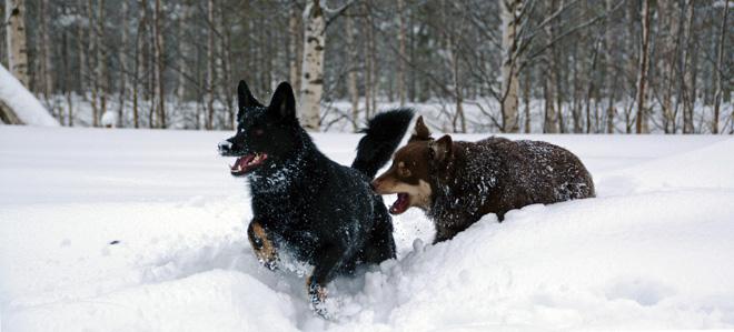 honden2