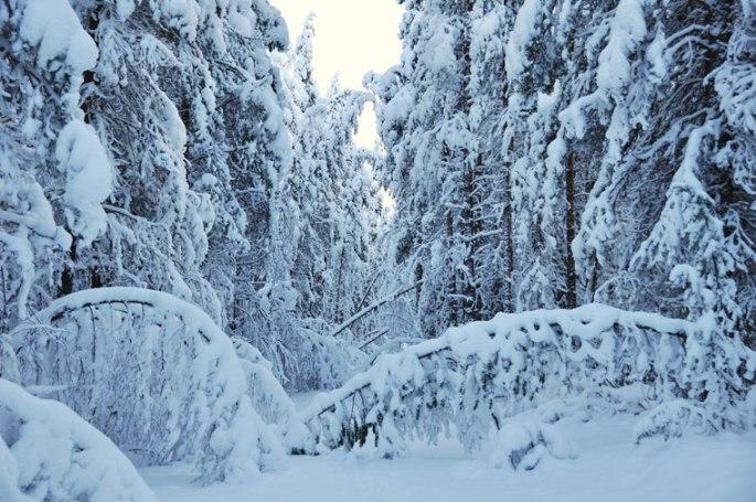 winter-bomen