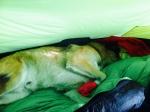 Lekker lui in de tent.