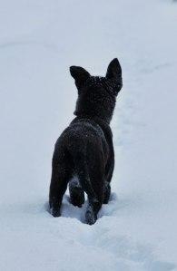 sneeuwval4