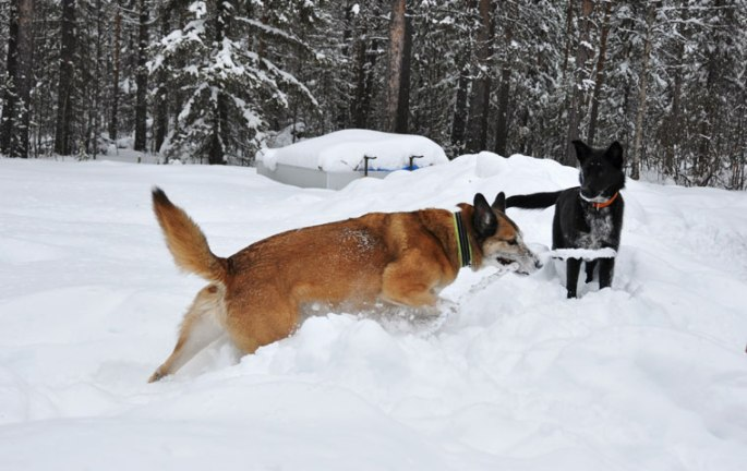 honden-stok-1