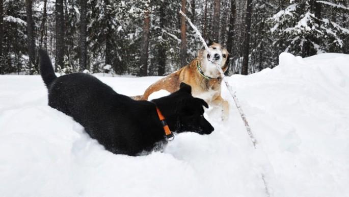 honden-stok-3