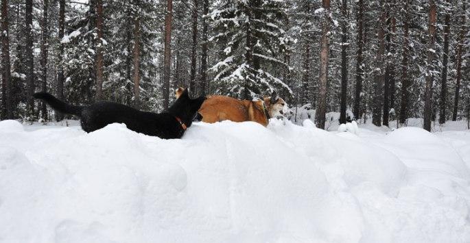honden-stok-5
