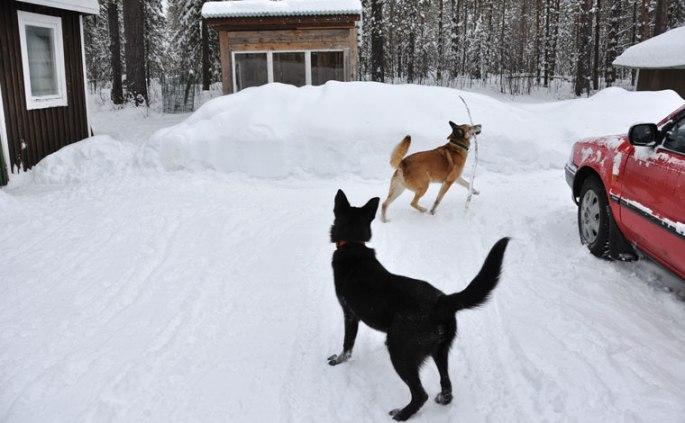 honden-stok