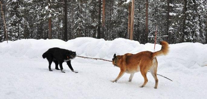 honden-stok2