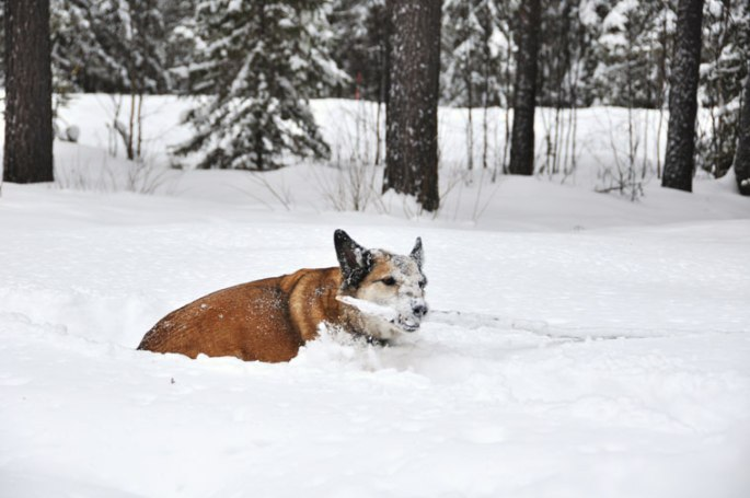 honden-stok4